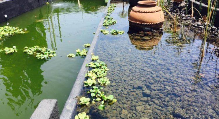 Pond Plant Filtration